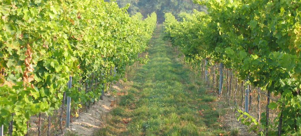 Zemědělské družstvo Hodonice - Tasovické vinařství